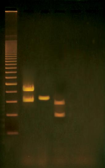 human pcr toolbox  u00bb biotek