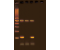 Experimenting with PCR