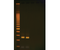 Two-Step Quick PCR