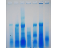 Agarose Gel Electrophoresis of Proteins